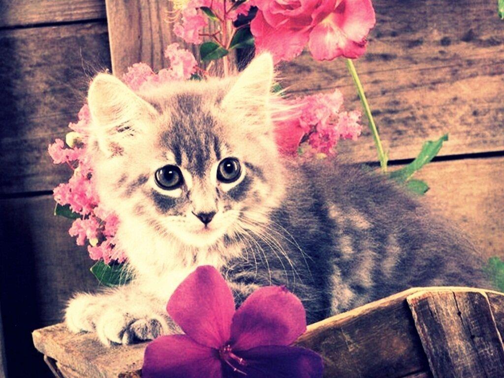 картинки очень красивые и милые котики