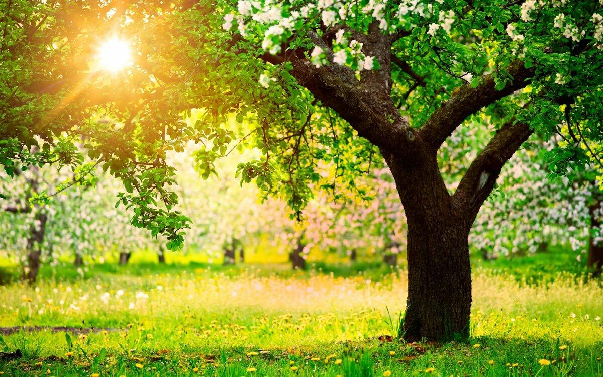Сад деревьев картинка