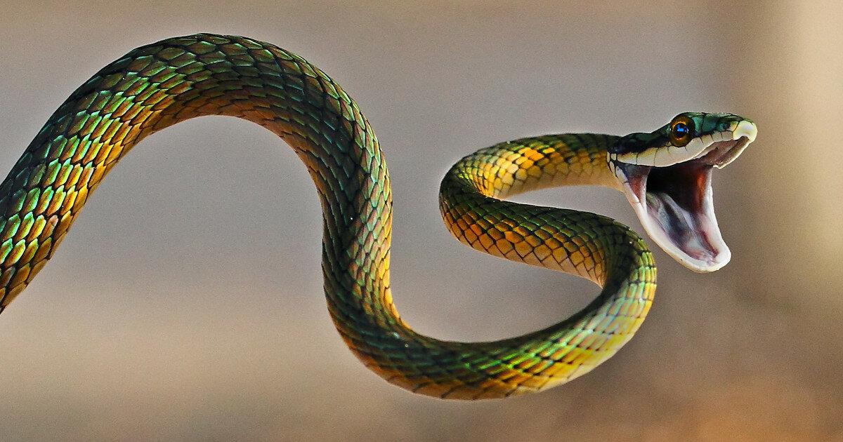 Картинки рыбок, картинки со змеями красивые