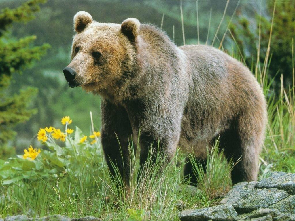 Людмилы, картинки медведь картинки медведь