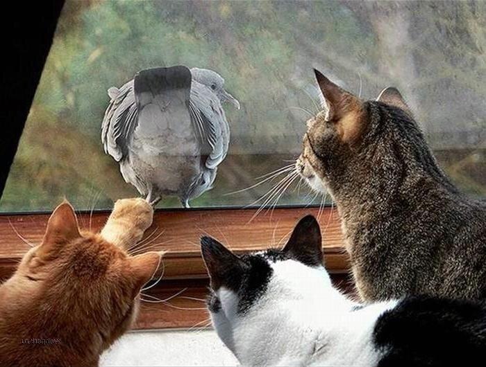 Прикольные картинки три кота, картинки надпись днем
