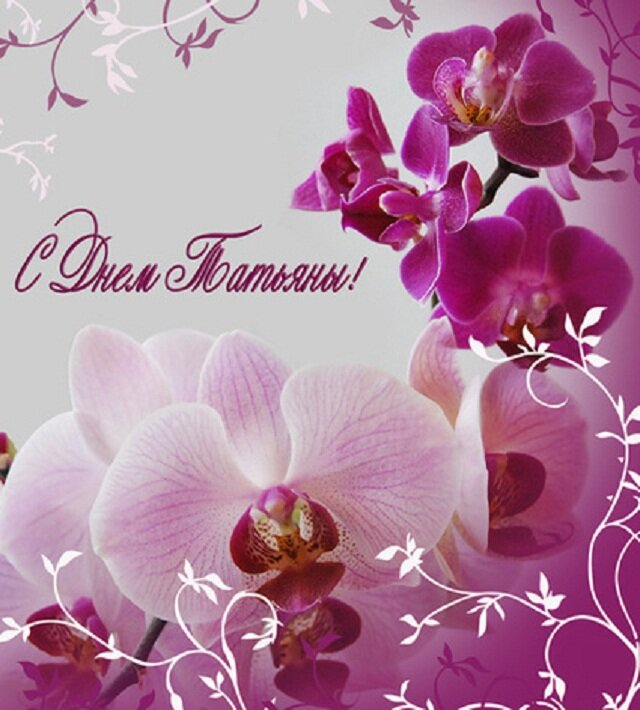 Картинки с орхидеями поздравления, звезда прикольные наука