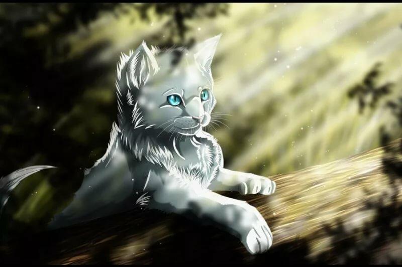 Очень красивые картинки про котов воителей