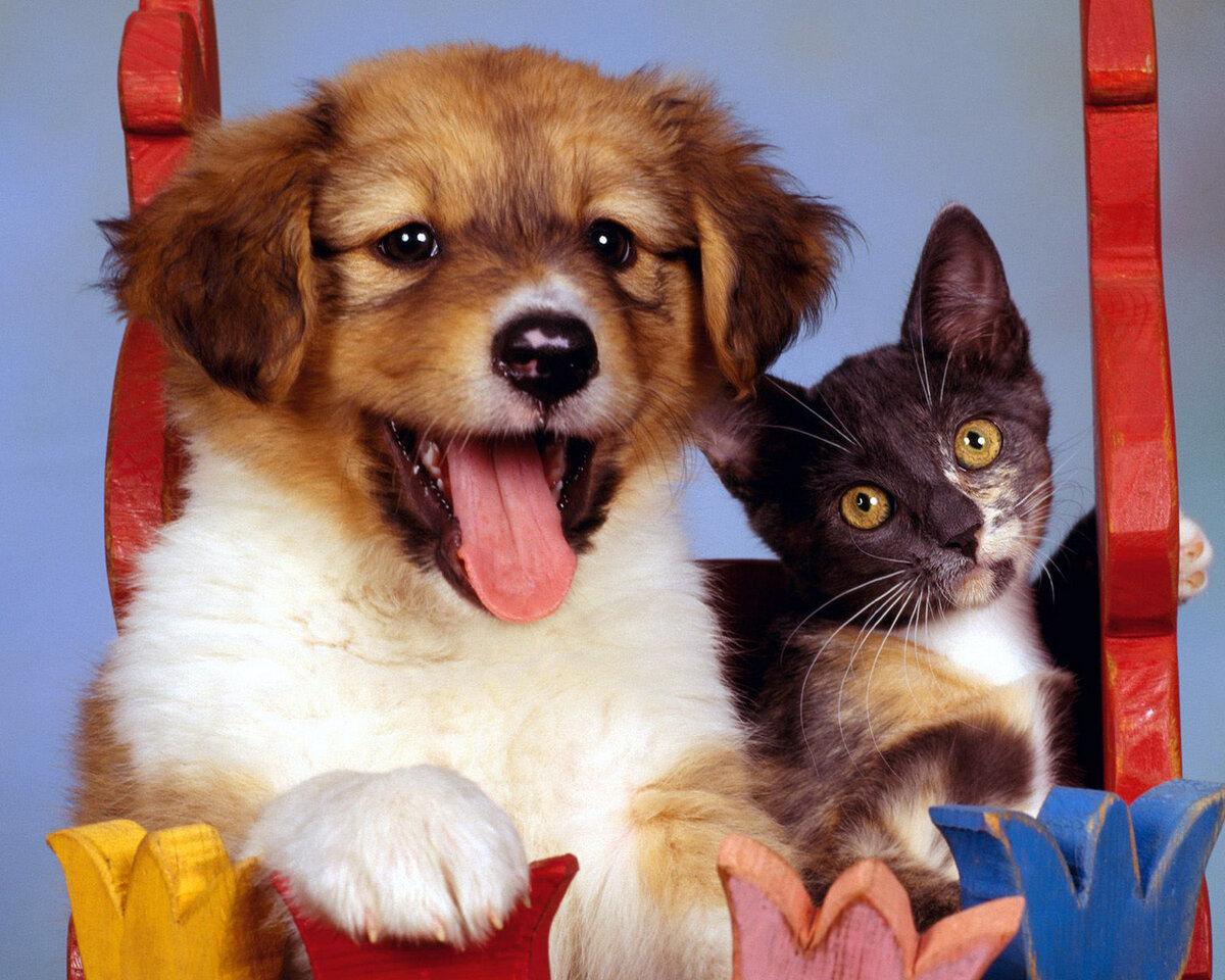 Картинки с собаками и кошками красивые породистые