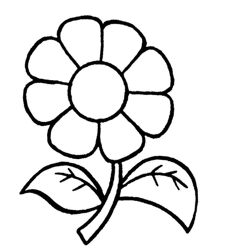 Рисунок ромашки для раскрашивания