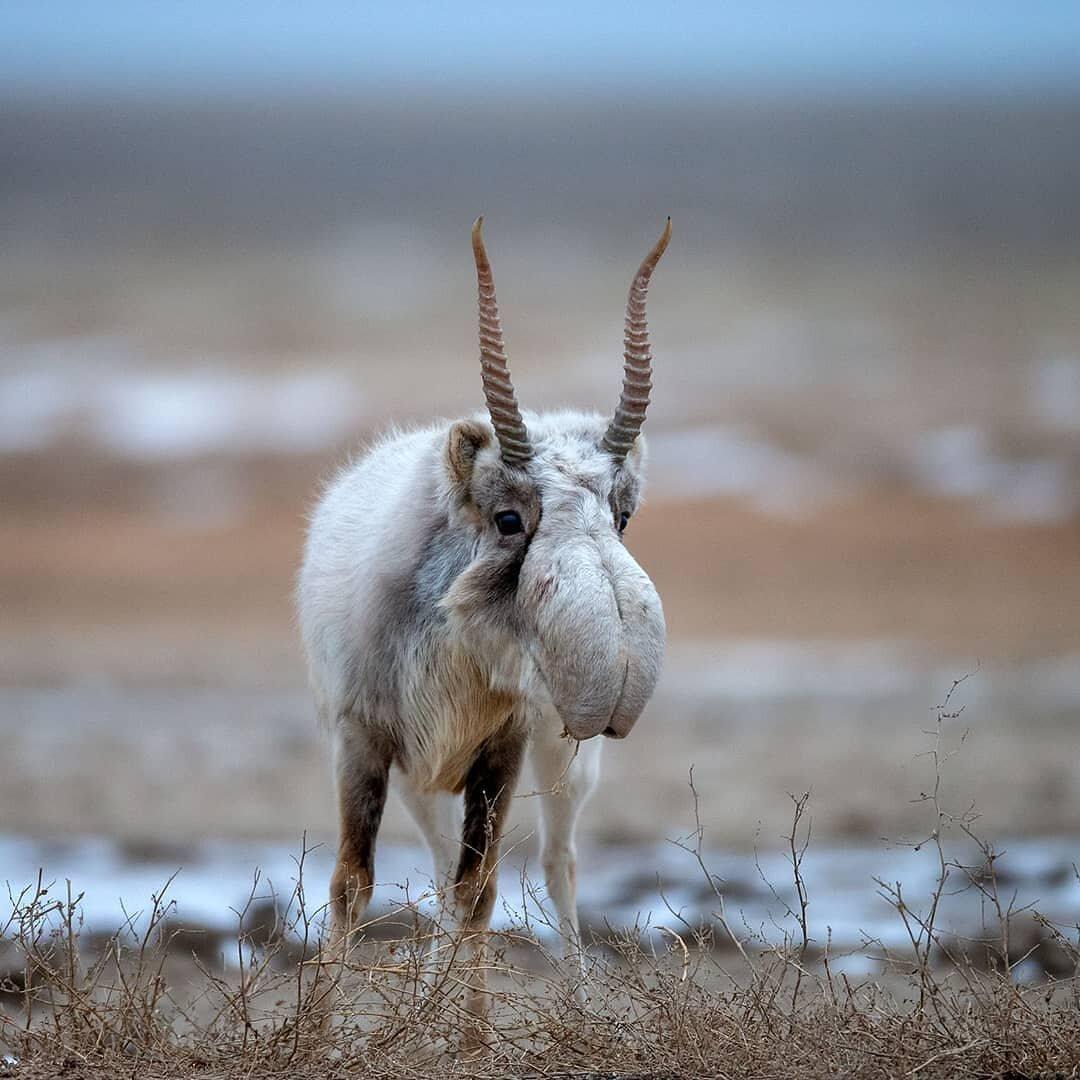 Открытка исчезающие виды животных бытовые предметы