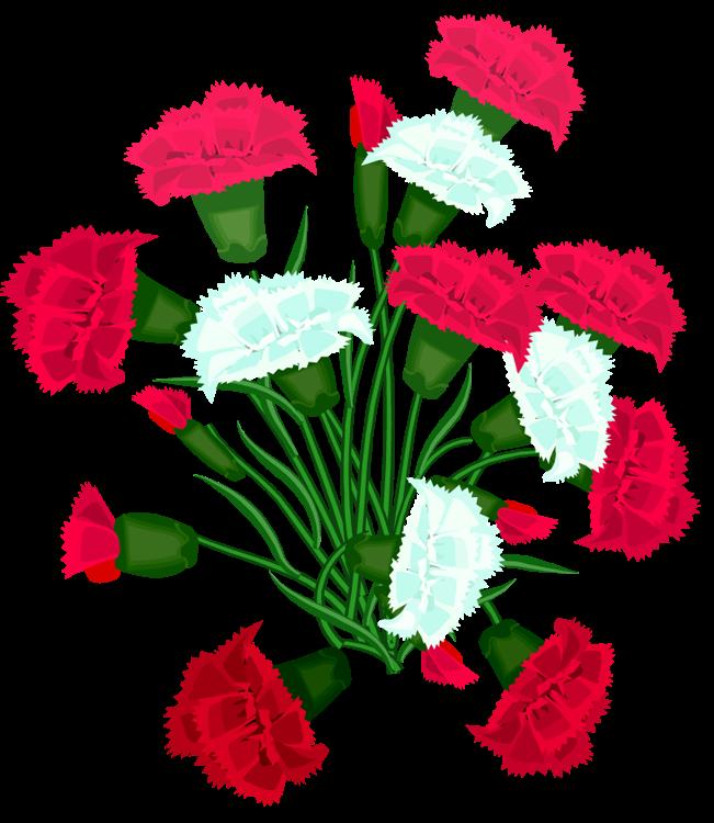 реликтовые цветы для открыток гвоздики условиях минимального ресурса