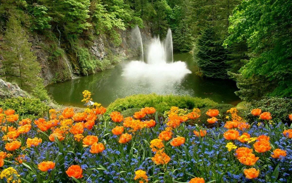 Фото природы с цветами