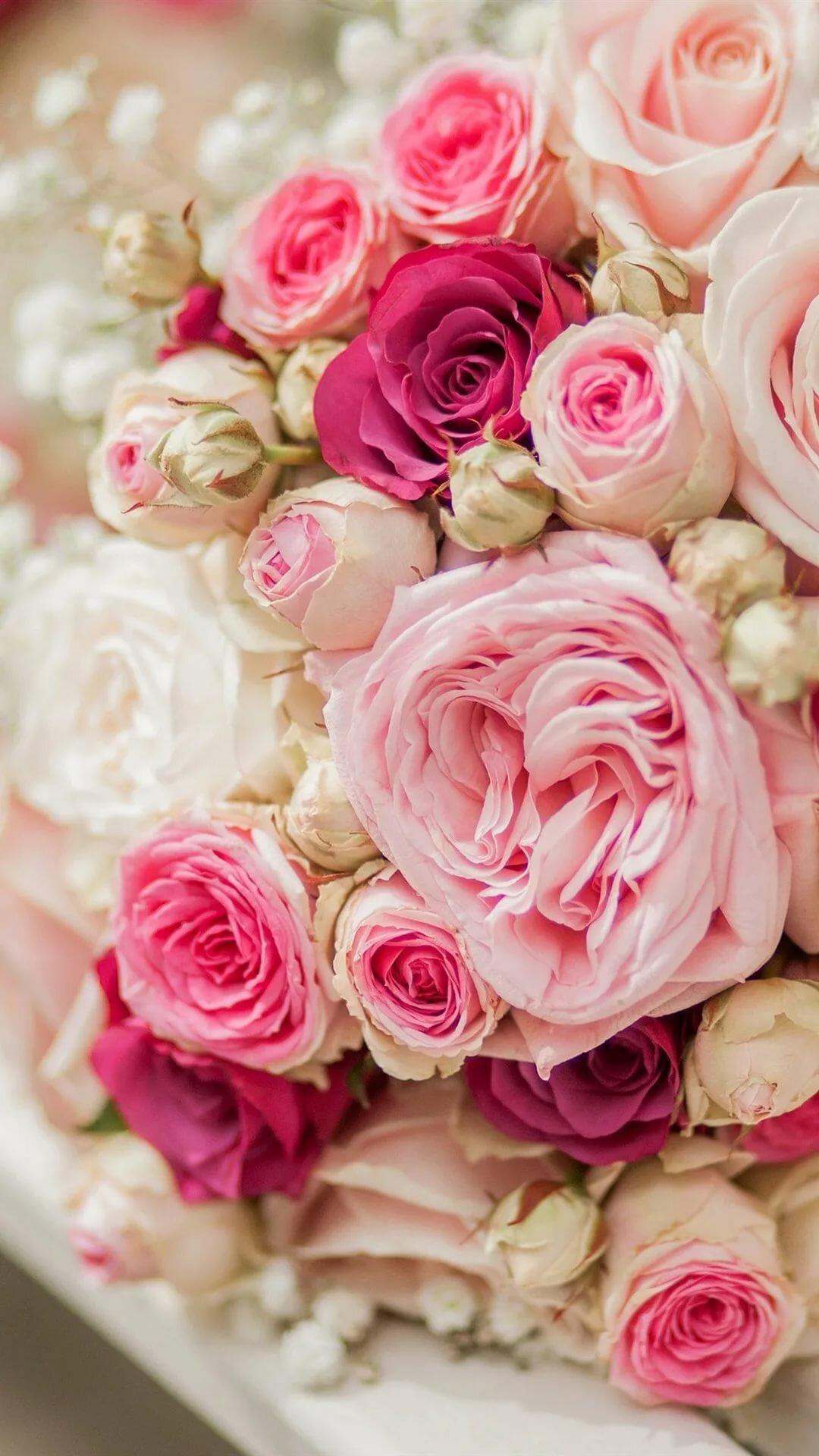 розы нежные картинки вертикальные