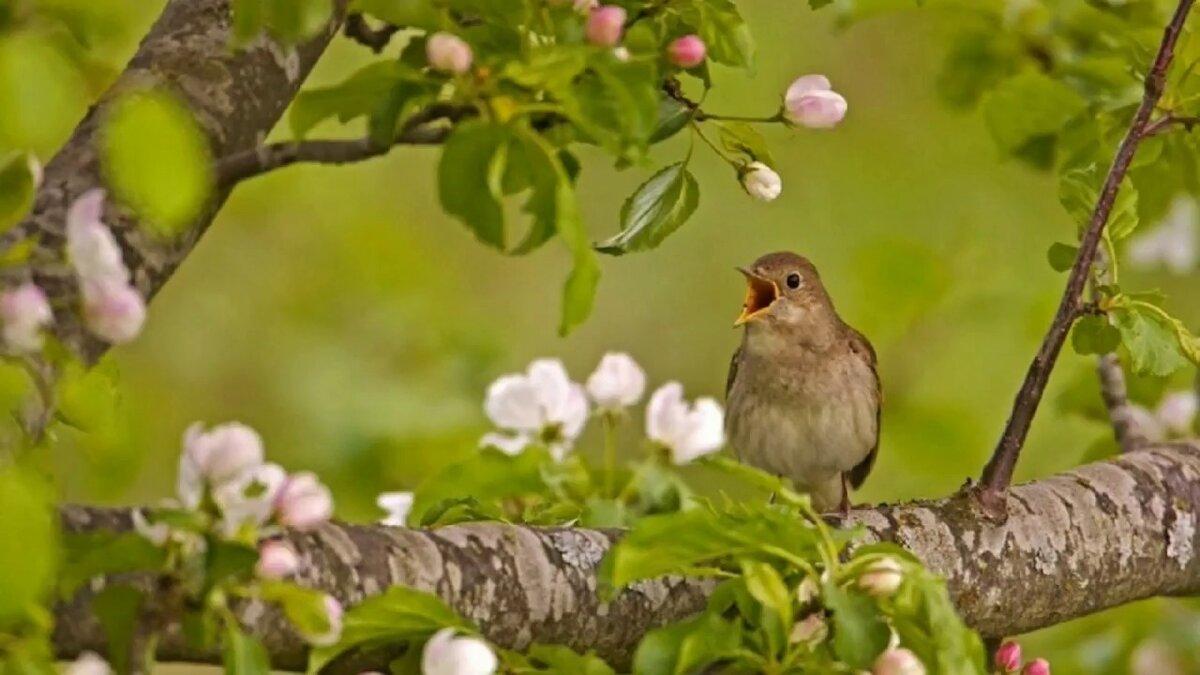 всегда картинки птицы в весеннем лесу ноты