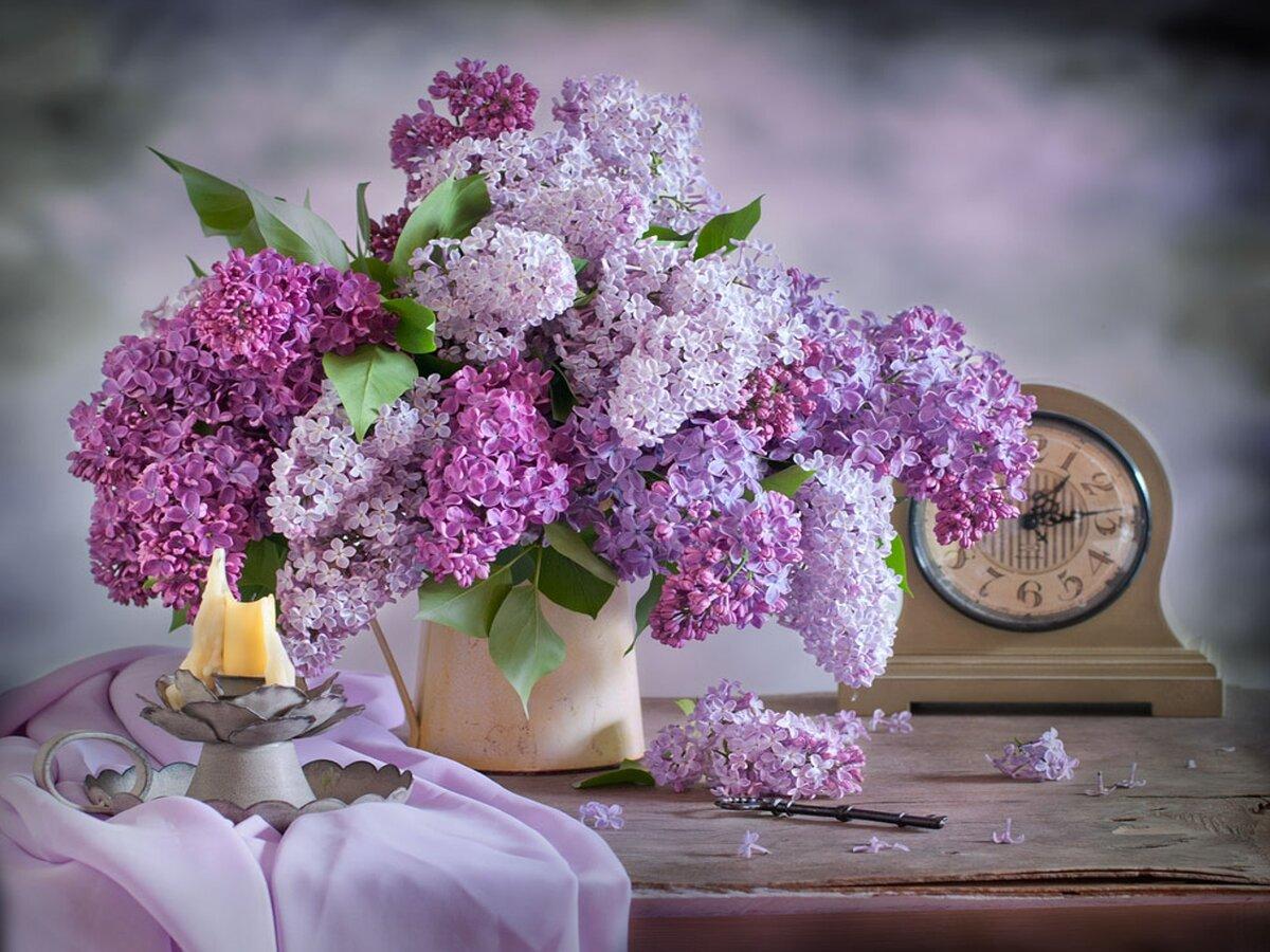 Цветы сирень букет фото, букет цветов доставкой