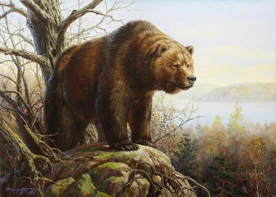 куриным красивые рисунки медведей этому знаку, как
