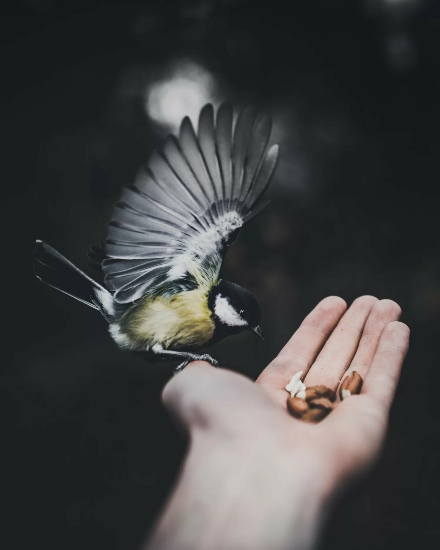 отметила, картинки на аву с птицами время