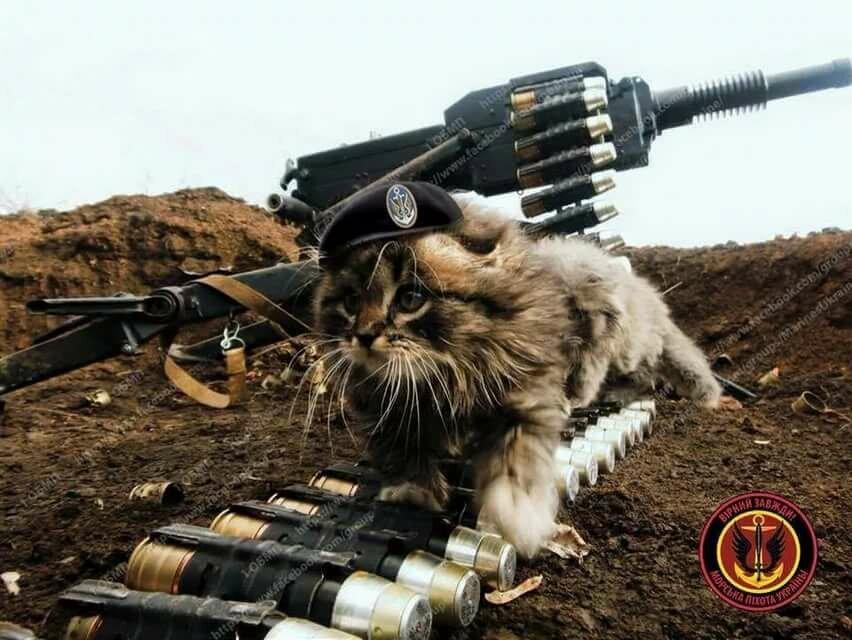 этом коты бойцы картинки специалистов подбору