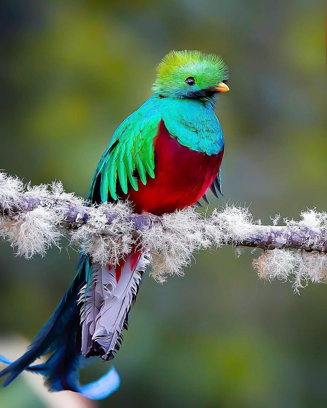 Боятся ли птицы ярких цветов