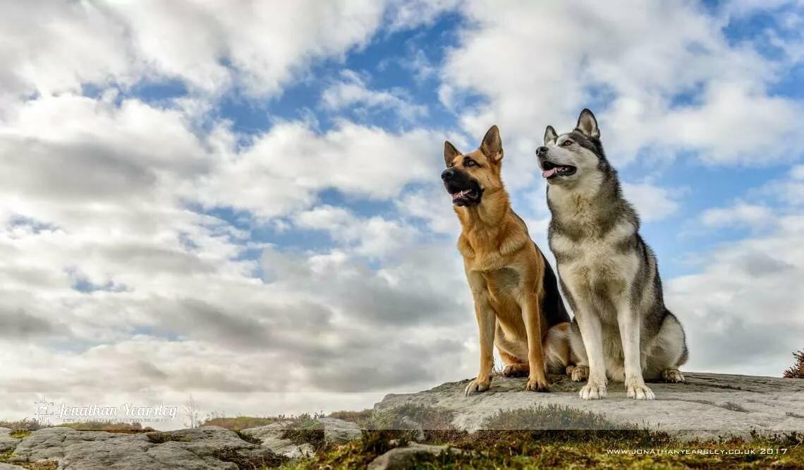 Картинки с собаками хаски на аву личной жизни