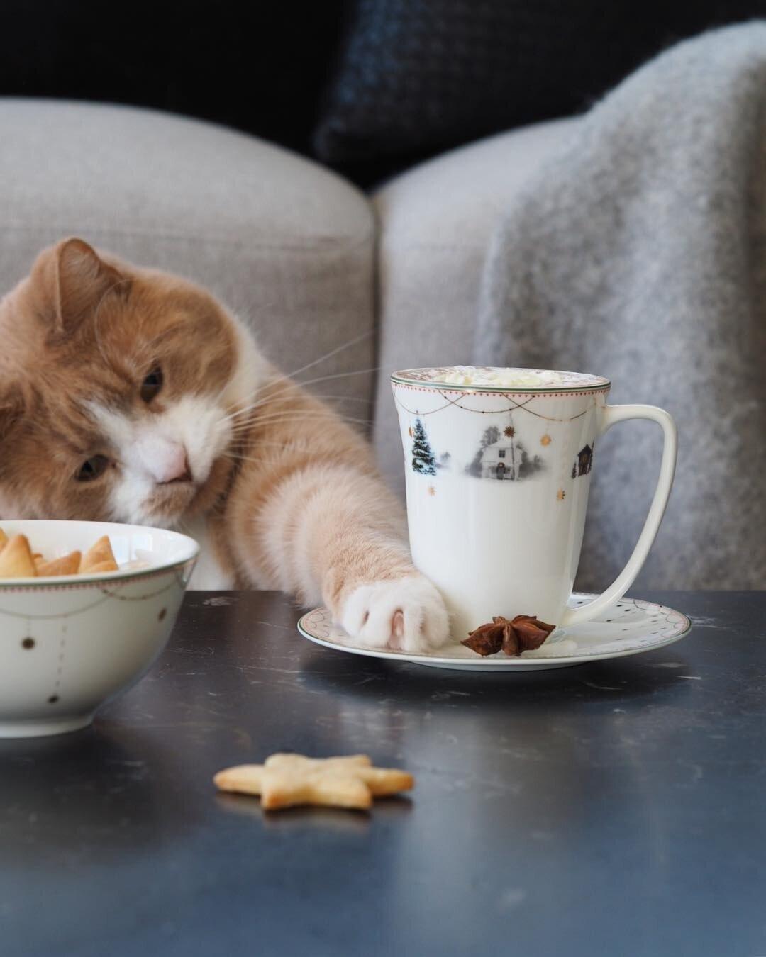 Картинки коты доброе утро