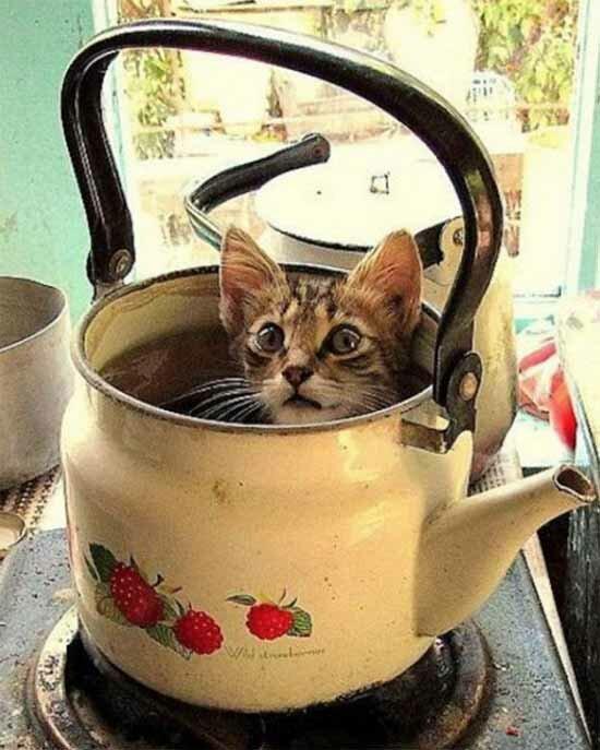 15 неожиданных мест, в которых можно найти кота фото 7