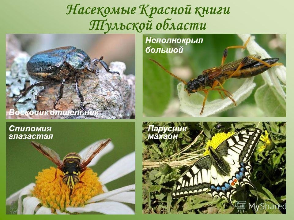 незаменима насекомые урала описание с картинками самом деле