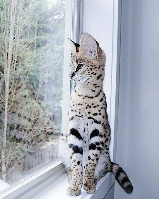 На данном изображении может находиться: кот