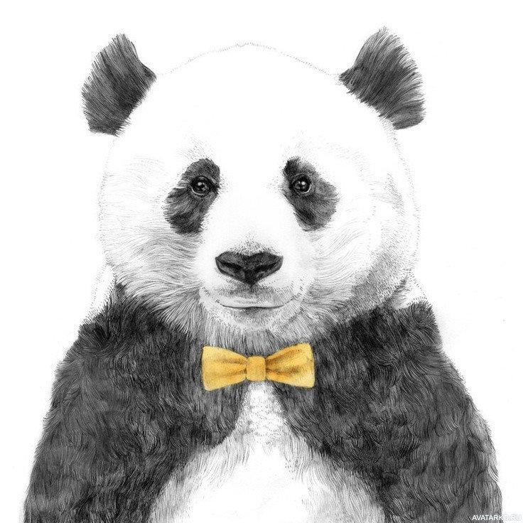 Панда смешные картинки рисунки