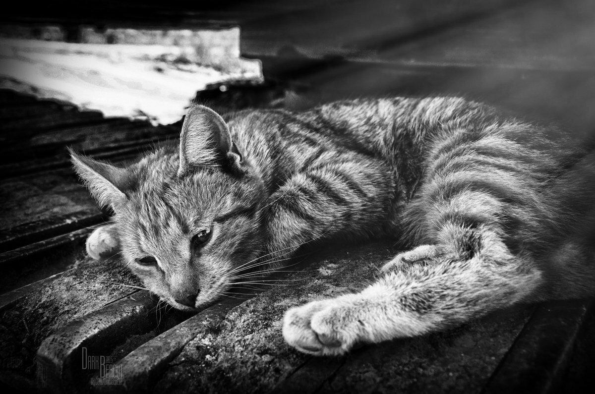 Картинка кот живу бедно