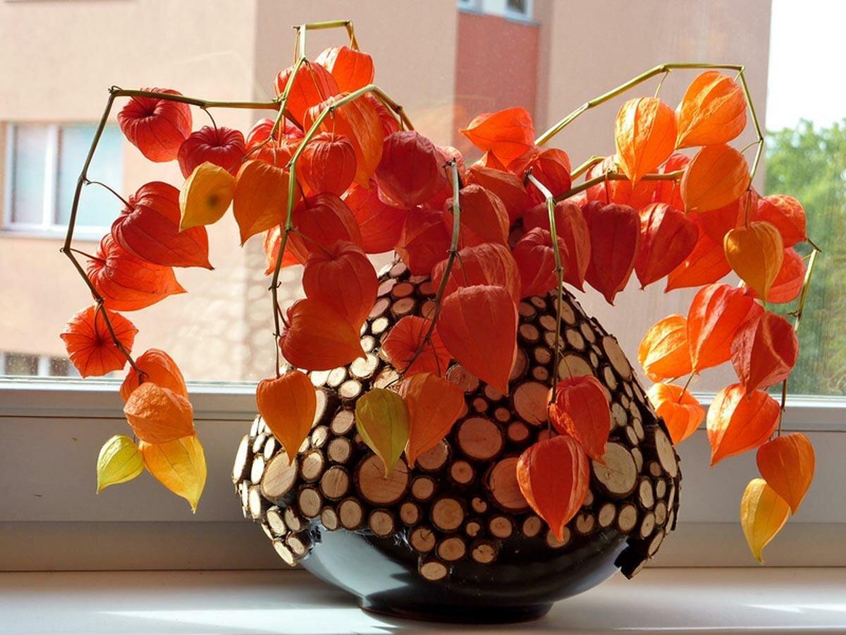 ваза с физалисами картинки разбросано