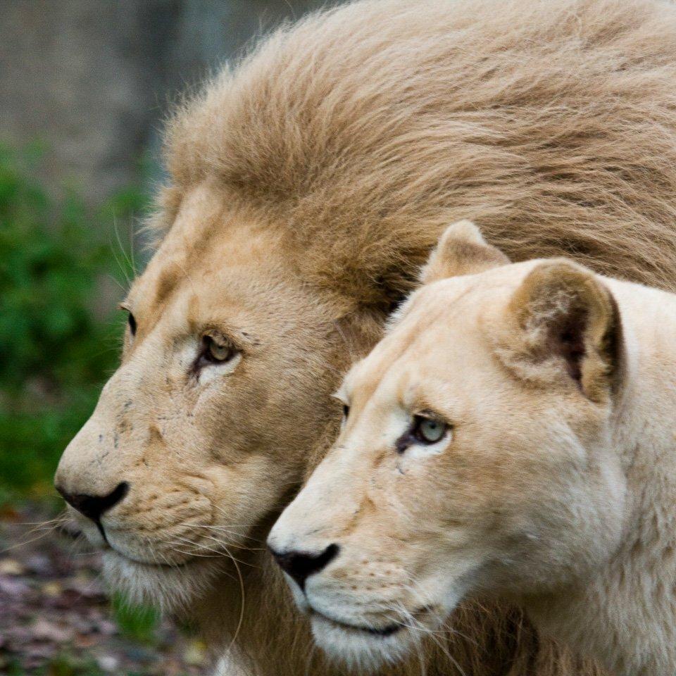 Картинки животных любовь