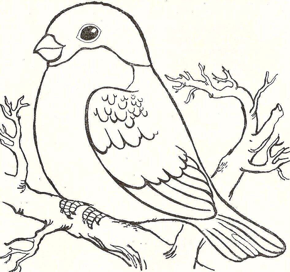 Картинка птица для детей распечатать