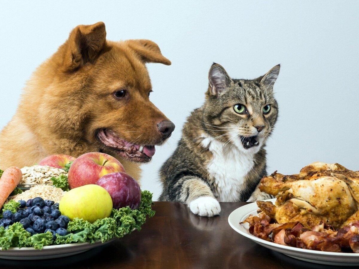 Вегетарианская диета у собак