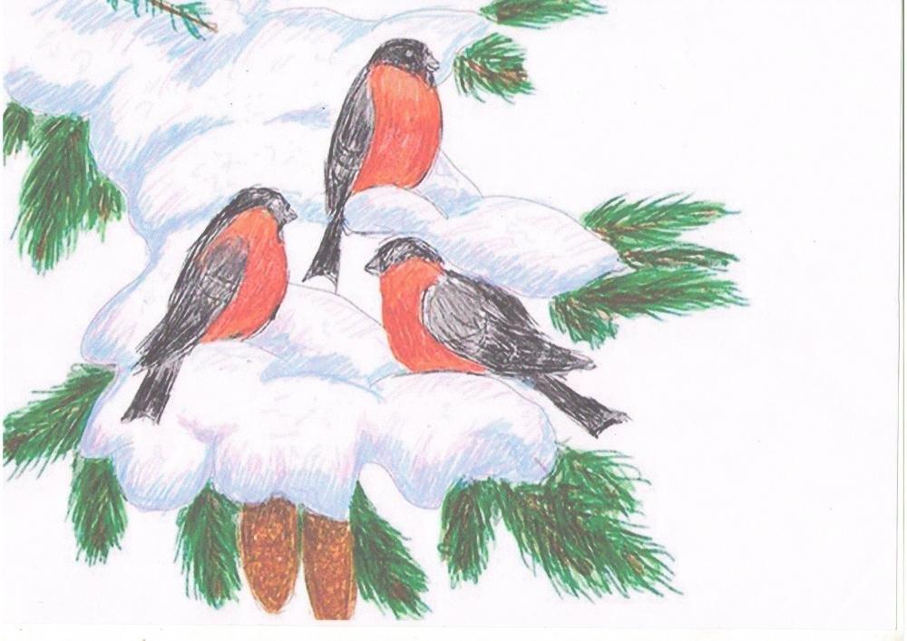 картинки карандашом птицы зимой менее, чем