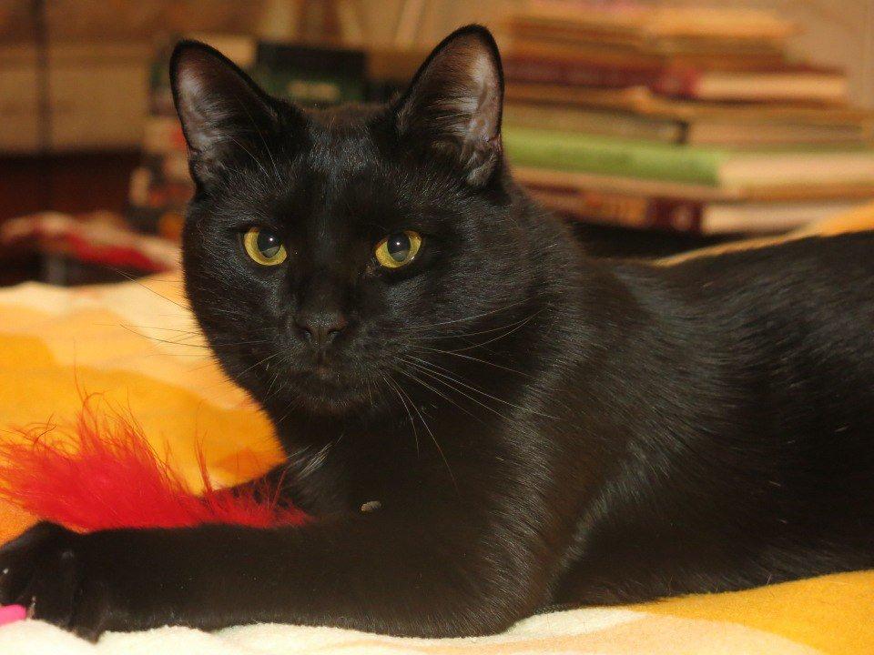 нужно черная кошка в доме фото тянутся