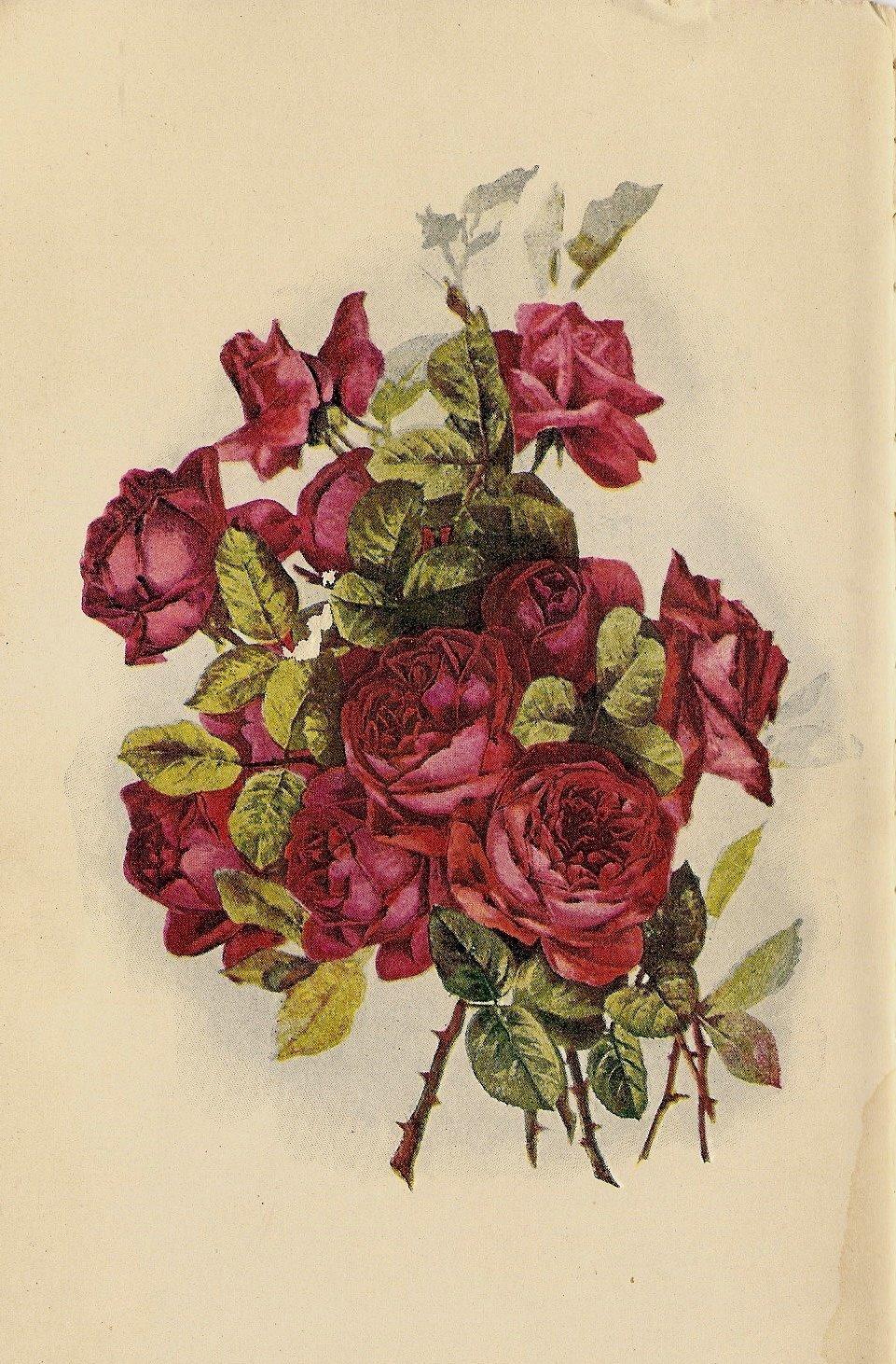 Постеры детскую, цветные старинные открытки