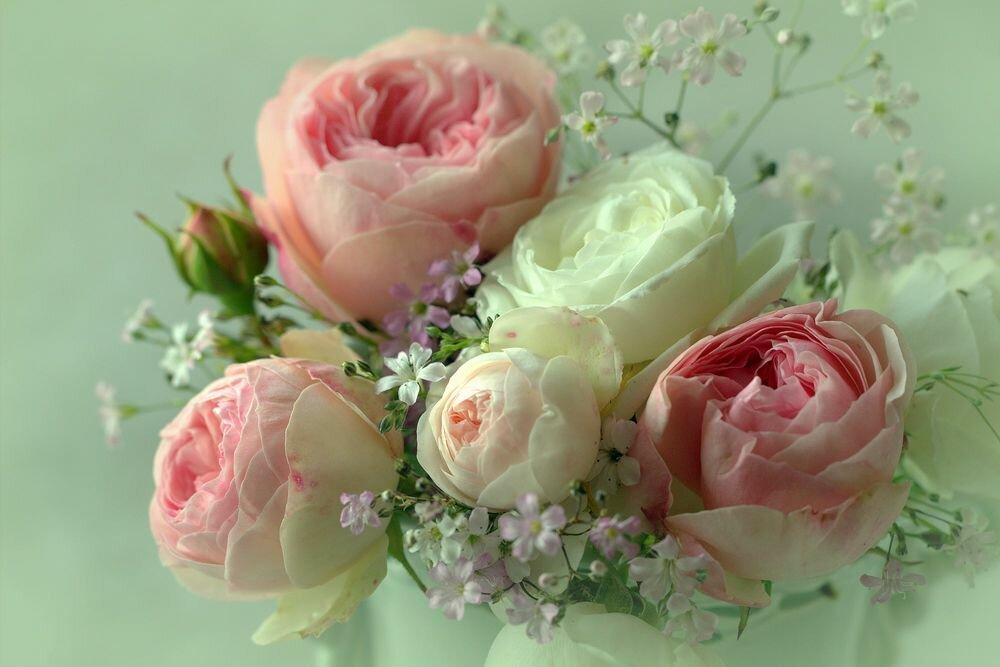 Приколы помойка, картинки с розами нежные