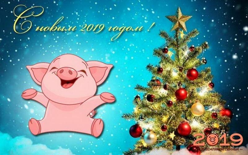 Анимация, красивые картинки поздравления с новым годом свиньи
