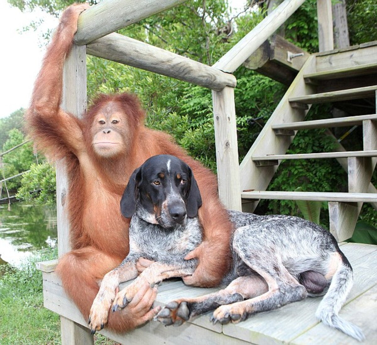 Смешные истории с животными картинки, класс как