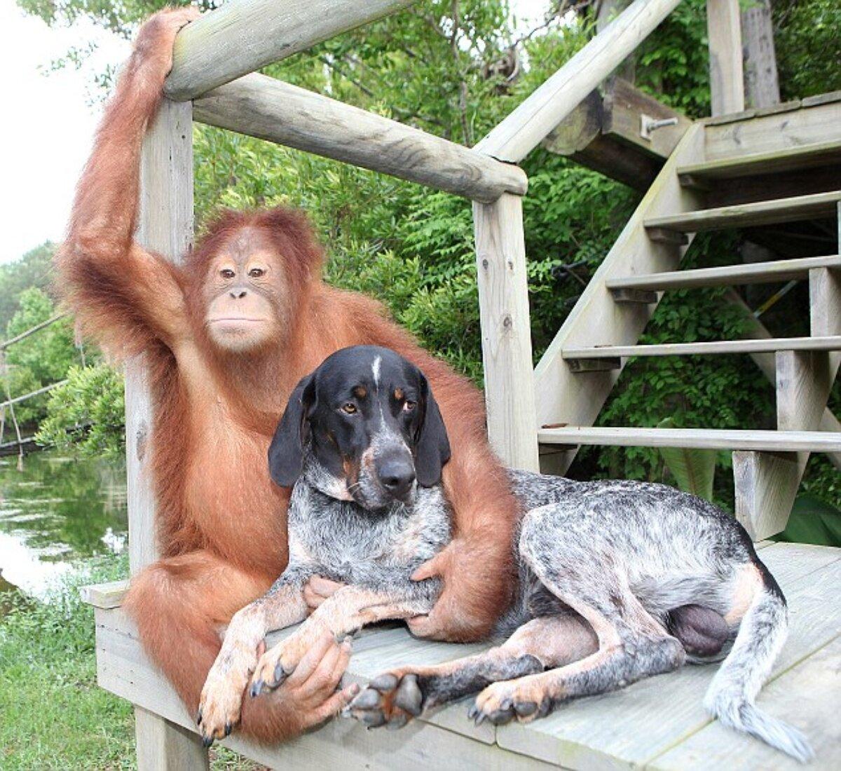 Для нового, картинка с поддержкой подруги смешные со зверями