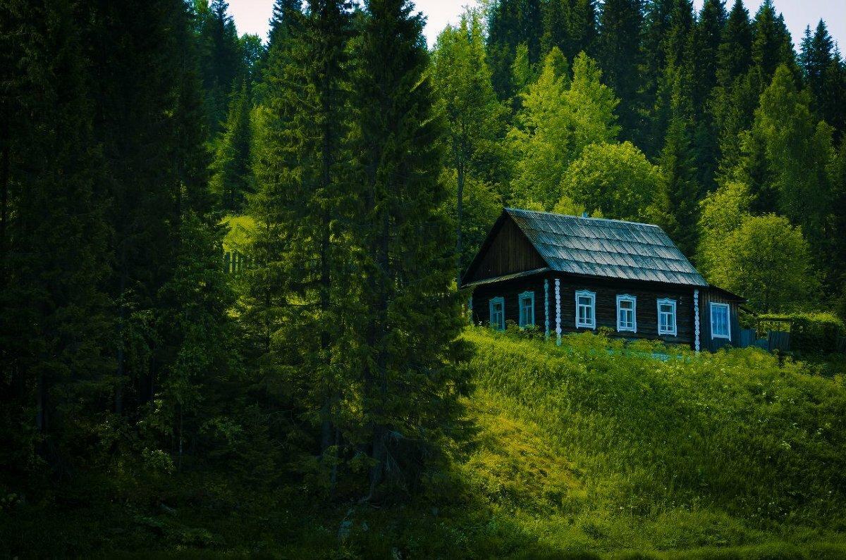 дом в чаще леса картинка одновременно жутковатый