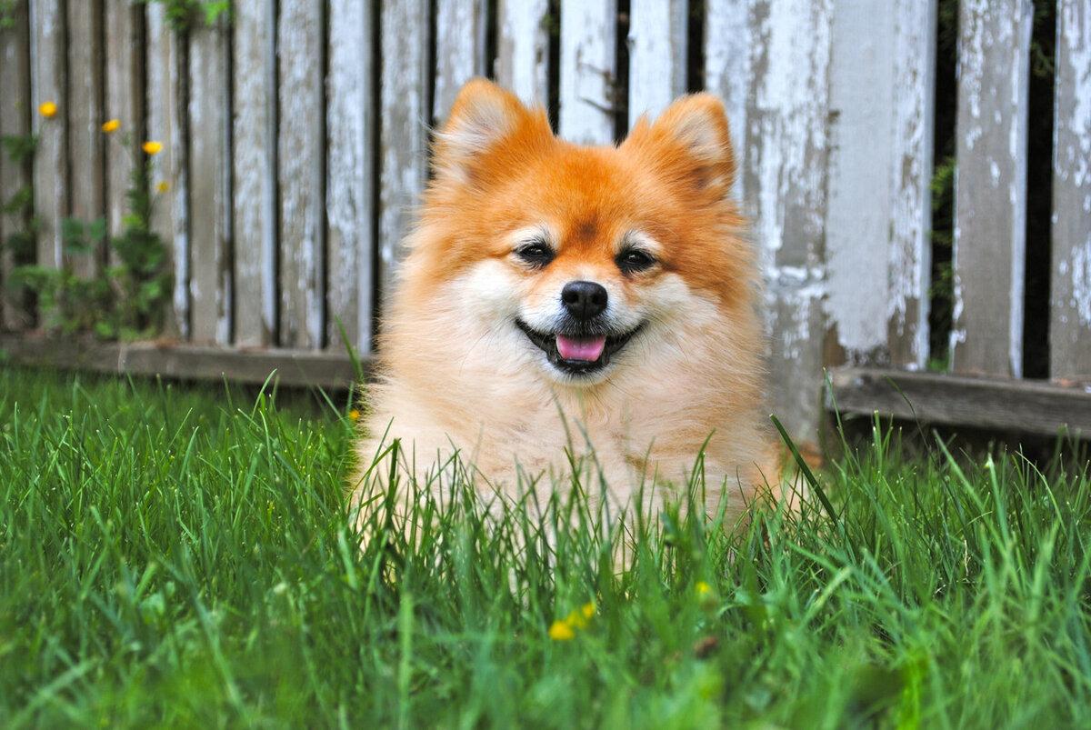 Картинки собачек породы