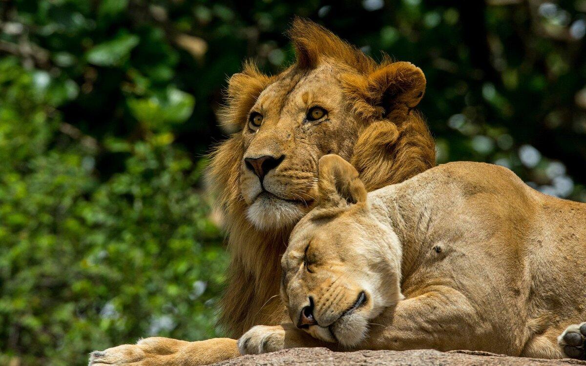Днем рождения, открытка любовь животных