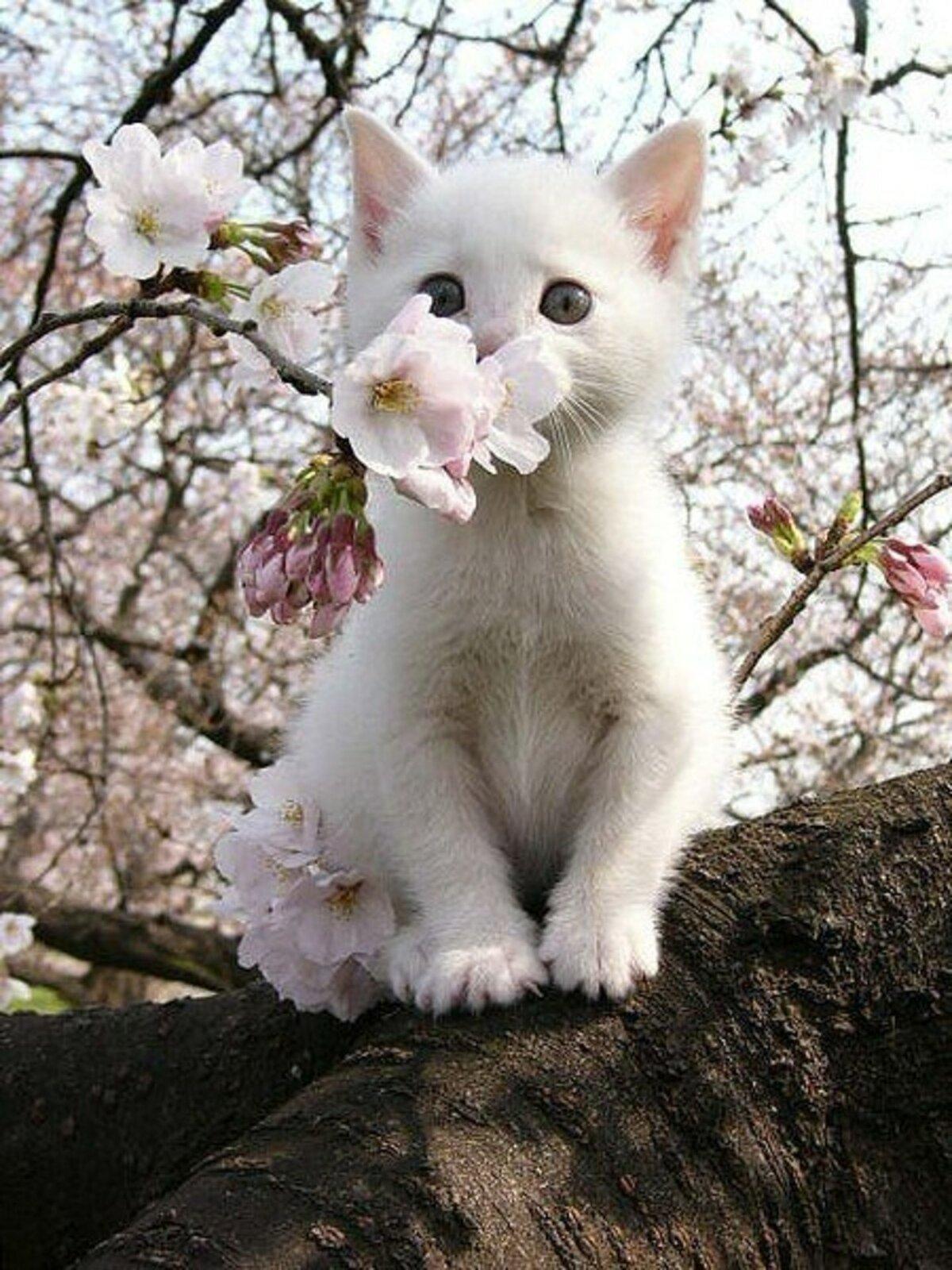 Картинки белые котята в цветах, падающим снегом картинки