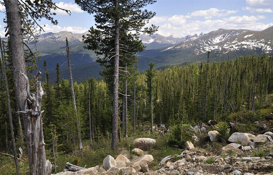 Восточная сибирь картинки лес