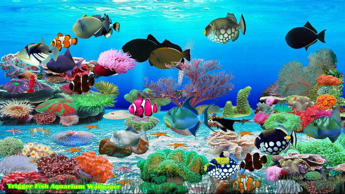 Картинки с рыбками на рабочий стол которые плавают