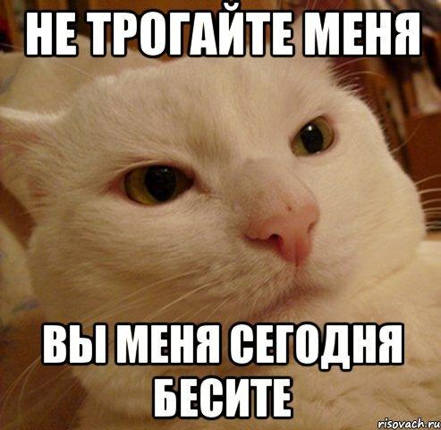 кот на картинке не беси меня анимационные