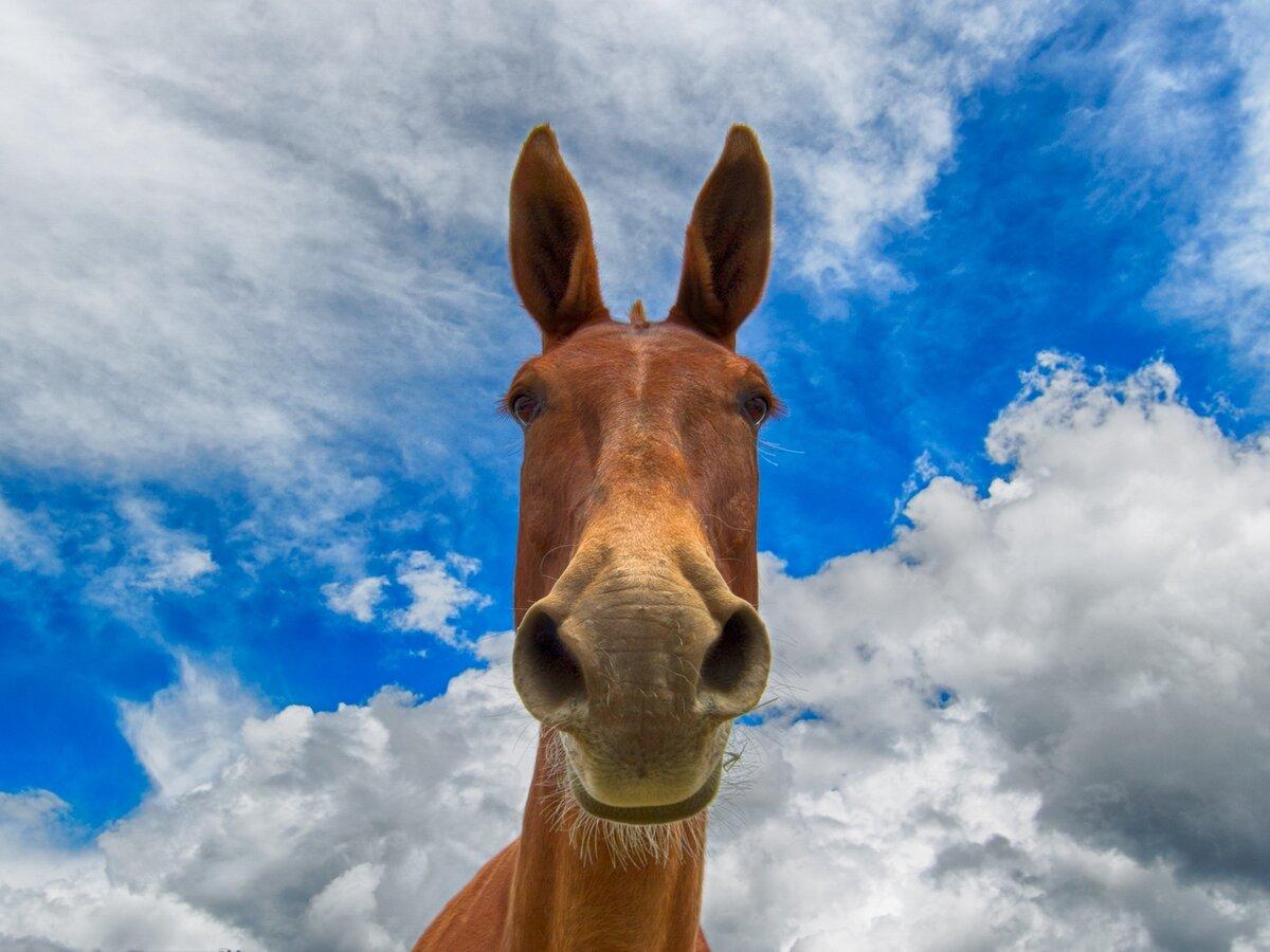 Смешные лошадки картинки, парней