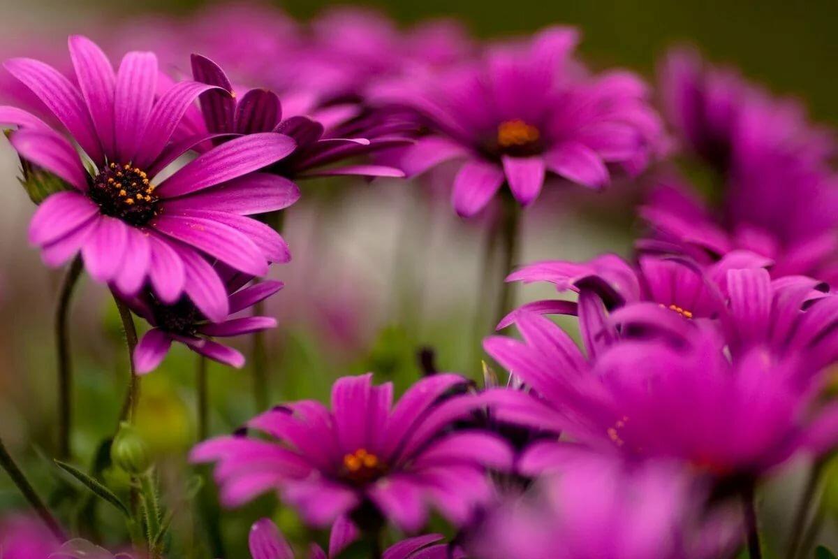 картинки на аву цветы большой размер