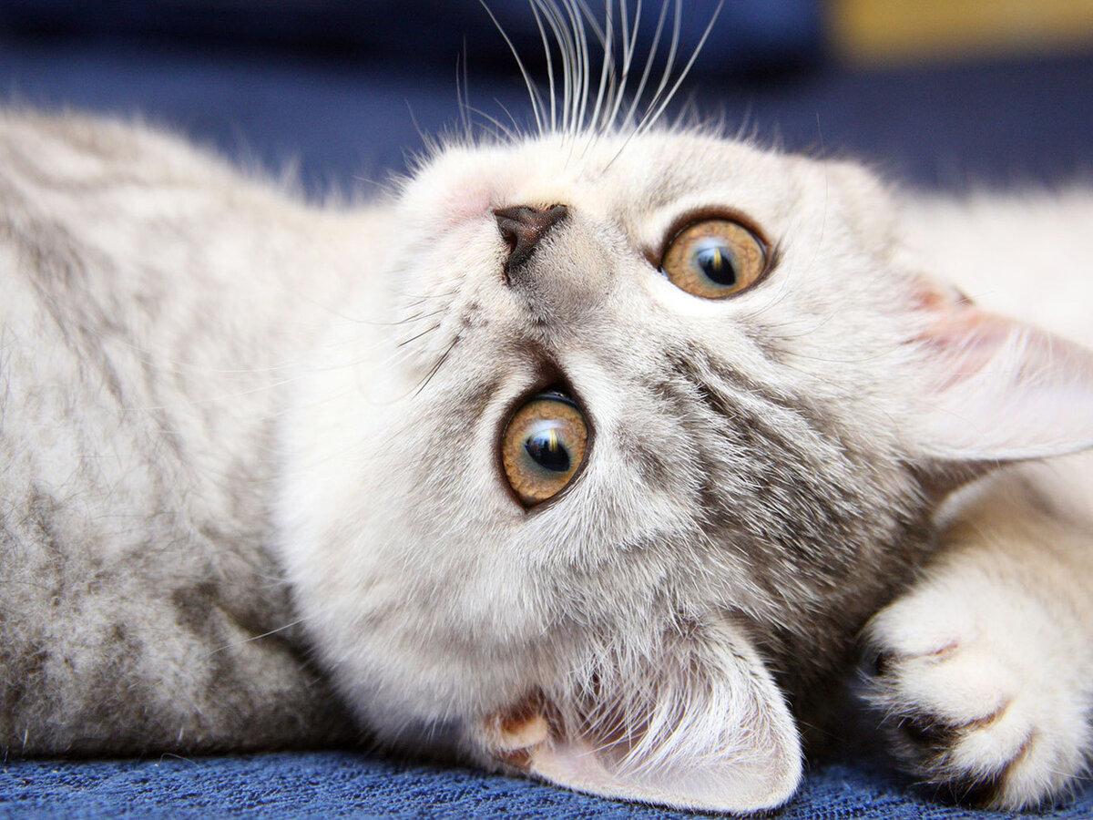Картинка котиков красивых