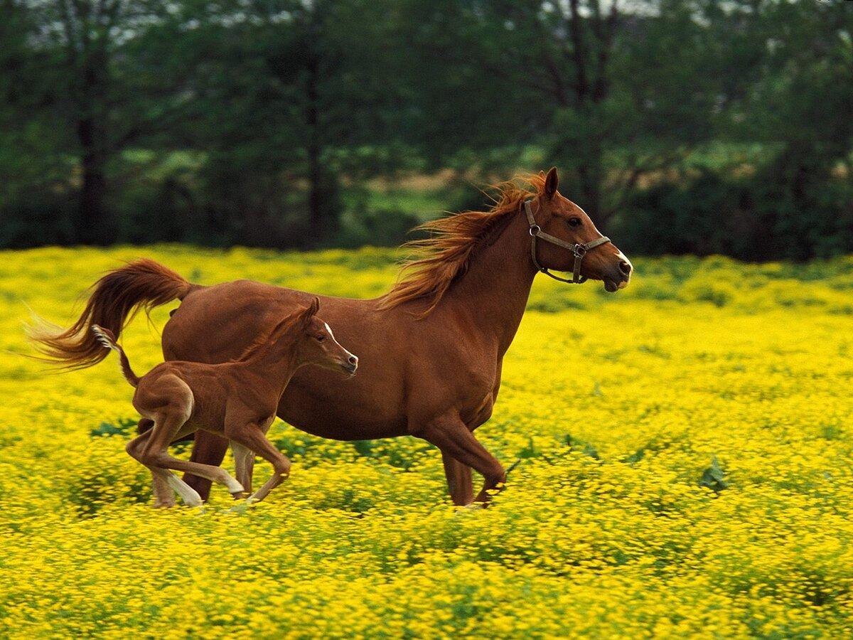 Лошади яркие картинки