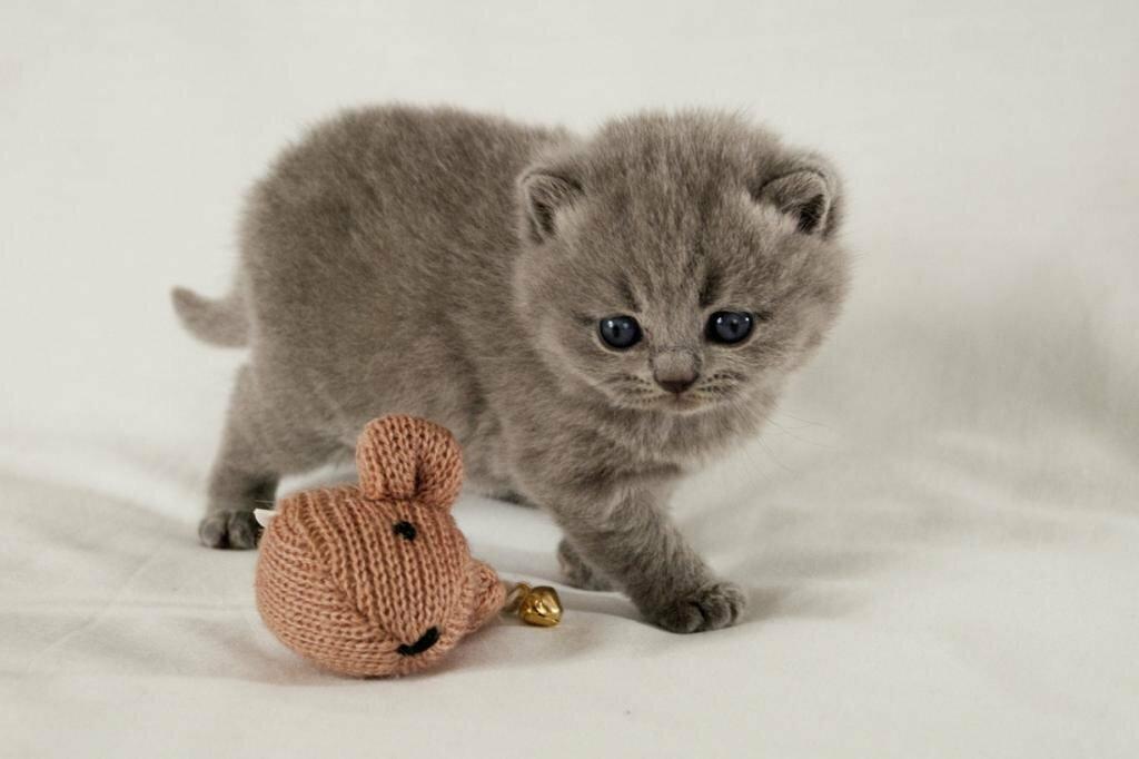 картинки маленькие котята вислоухие котята так ждем лета