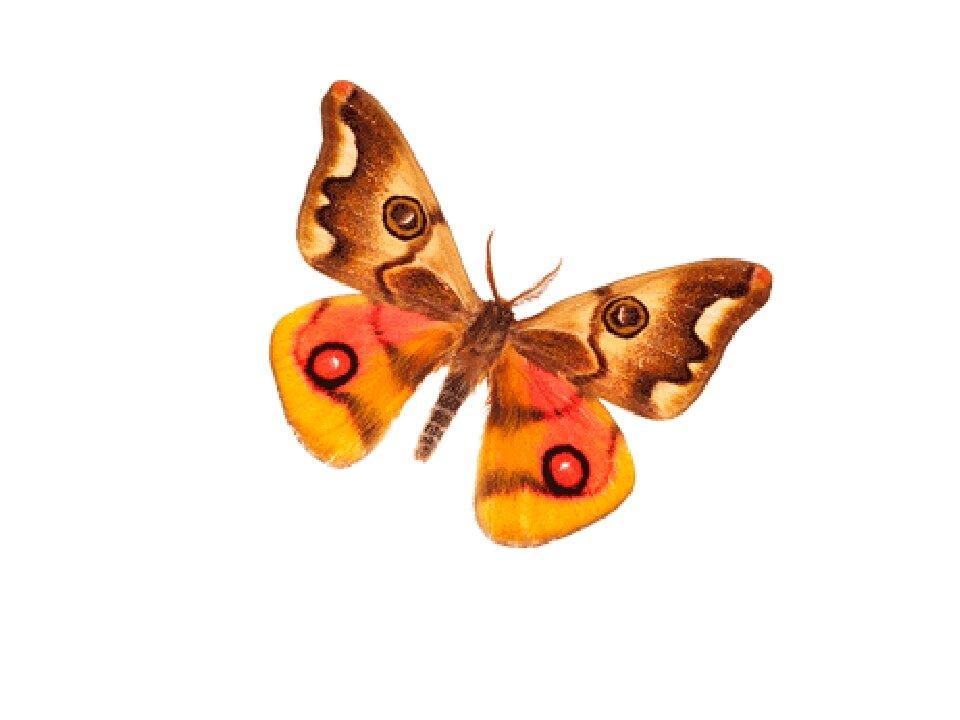 Бабочки картинки для детей анимация, картинки